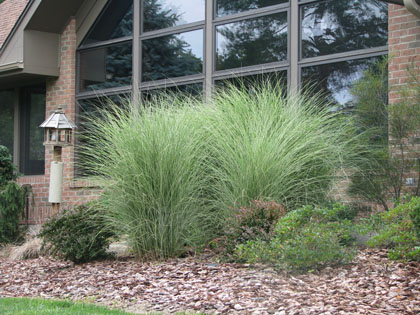 Home landscaping trends for 2013 fieldgate homes blog for Landscaping with decorative grasses